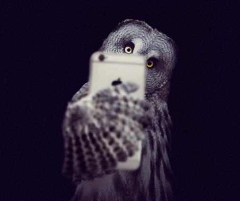 owlselfie